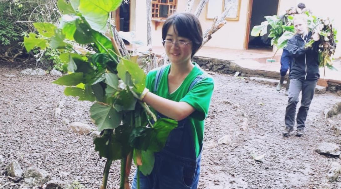 ガラパゴスゾウガメへの餌やりの準備に努める日本人高校生ボランティア